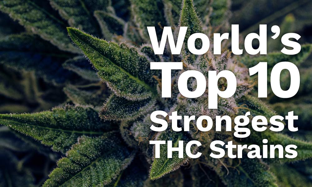top 10 strongest thc strains