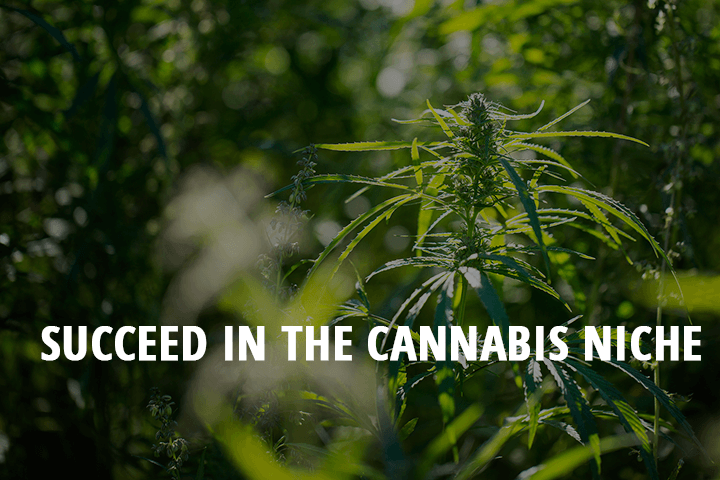 succeed in the cannabis niche