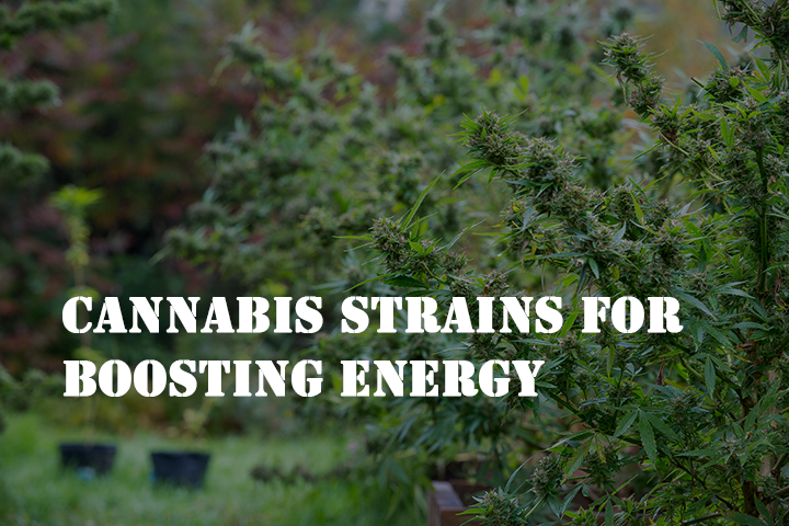 best cannabis strains for boosting energy