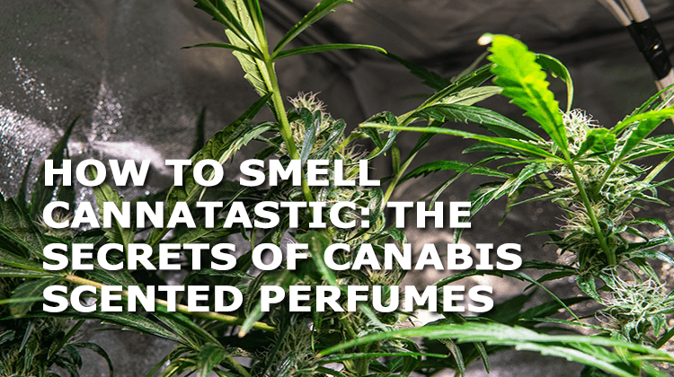 how to smell cannatastic the secrets of cannabis scented perfume