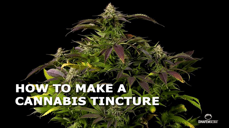 how to make a cannabis tincture 1