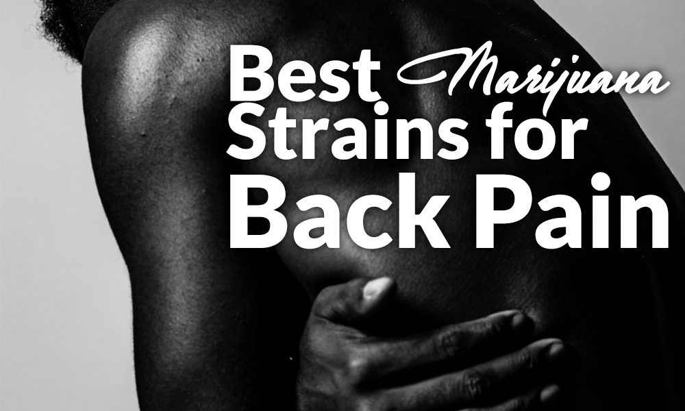 best marijuana strains back pain