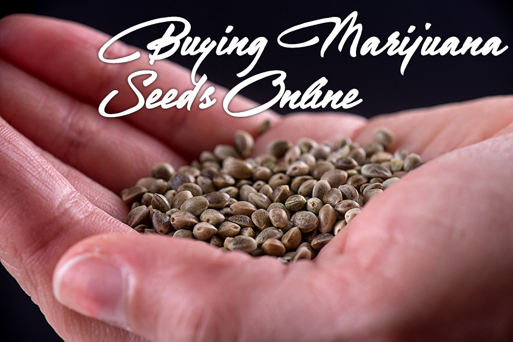 buying marijuana seeds online