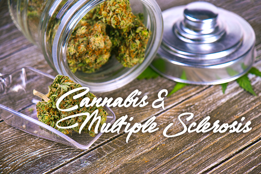 cannabis multiple sclerosis