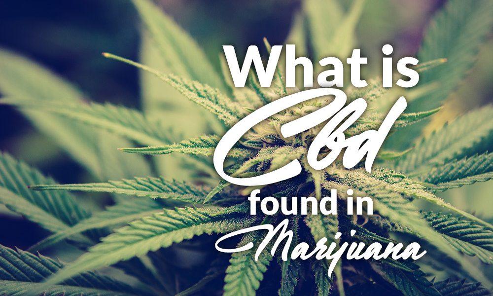 cbd marijuana