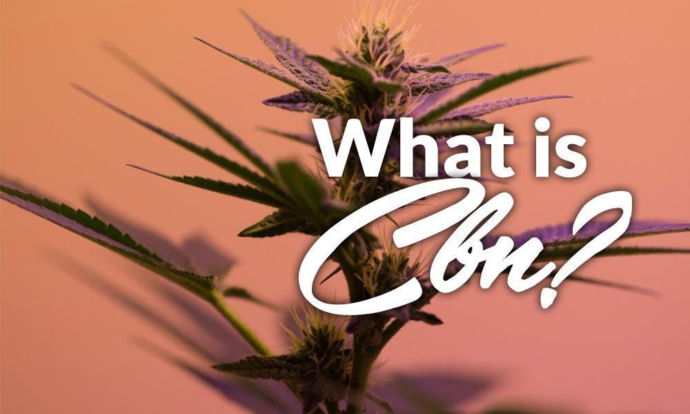 cbn marijuana