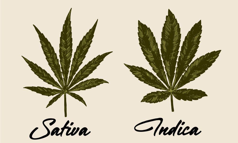 indica vs sativa differences