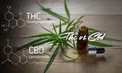 thc compared to cbd