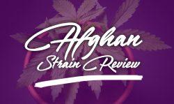 afghan marijuana strain review