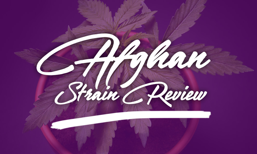 afghan marijuana strain review