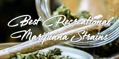 best recreational marijuana strains