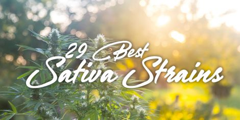 best sativa strains