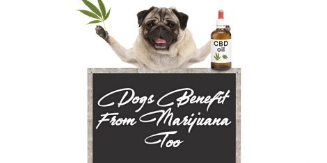 dogs benefit from marijuana