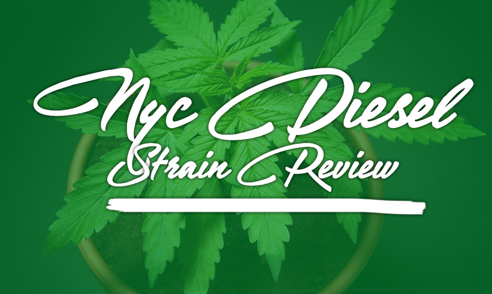 NYC diesel strain