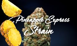 pineapple express strain