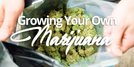 grow your own marijuana
