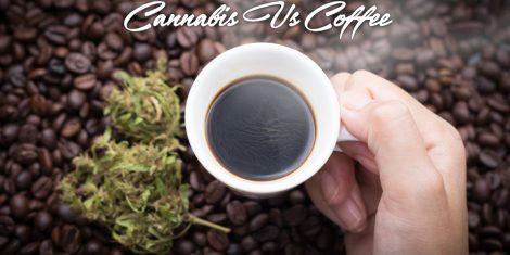 cannabis versus coffee