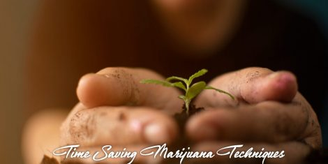 time saving marijuana growing techniques