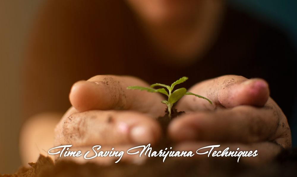 time saving marijuana growing techniques