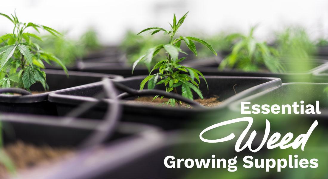 essential weed growing supplies
