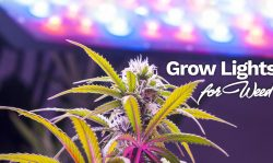 grow lights for weed