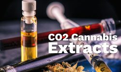 how co2 cannabis extracts are made