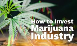 investing in the marijuana industry