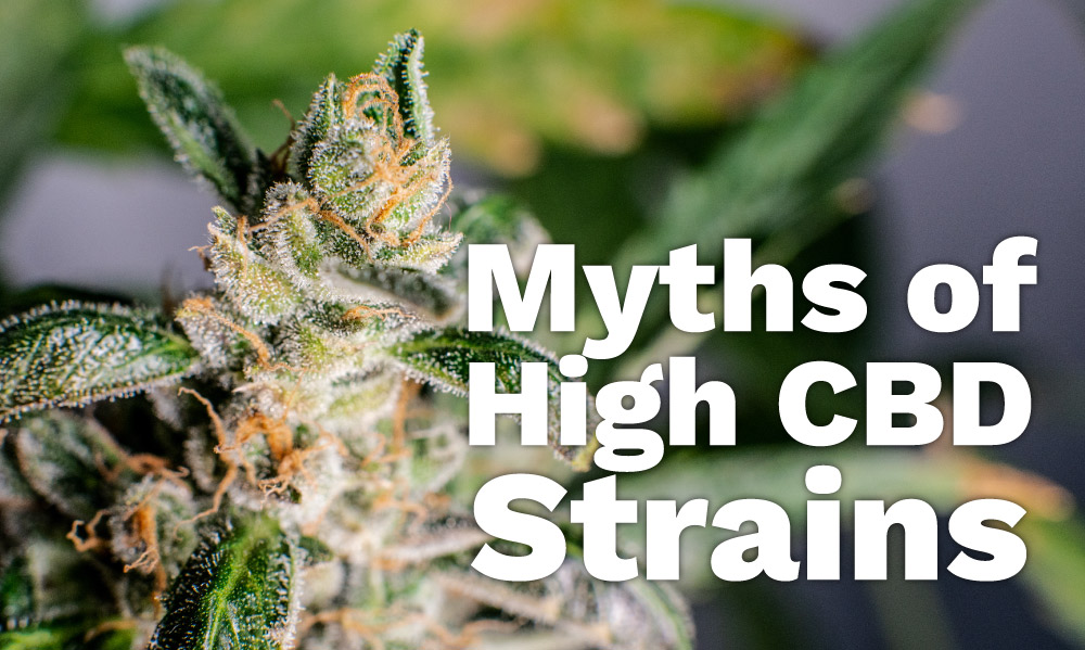 myths of high cbd strains