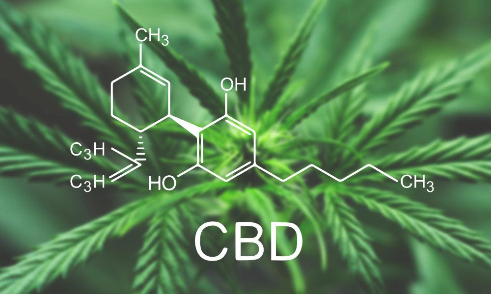 history cbd cannabis