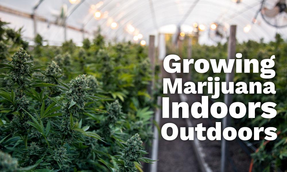 growing marijuana indoors outdoors