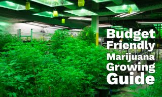 budget grow guide